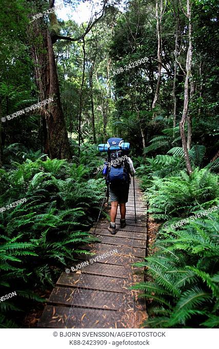 Bushwalker in Wilsons Promotary National Park. Victoria, Australia