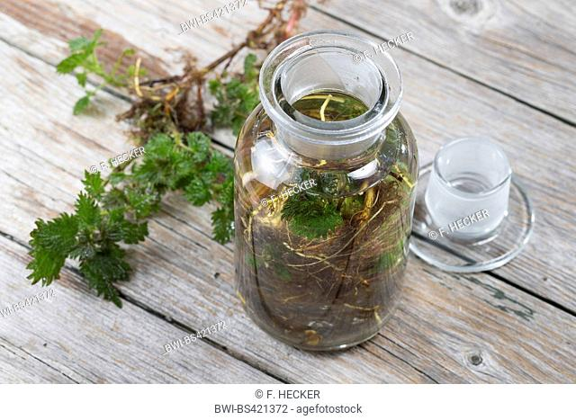 stinging nettle (Urtica dioica), tincture made from roots of stinking nettle, Germany