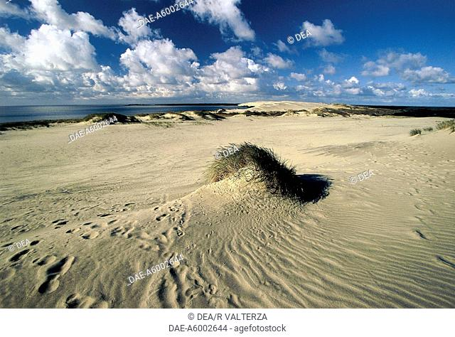 Lithuania - Neringa - Curonian Spit (Neringa or) (UNESCO World Heritage, 2000). The dunes near Nida, known as the Sahara of East Prussia