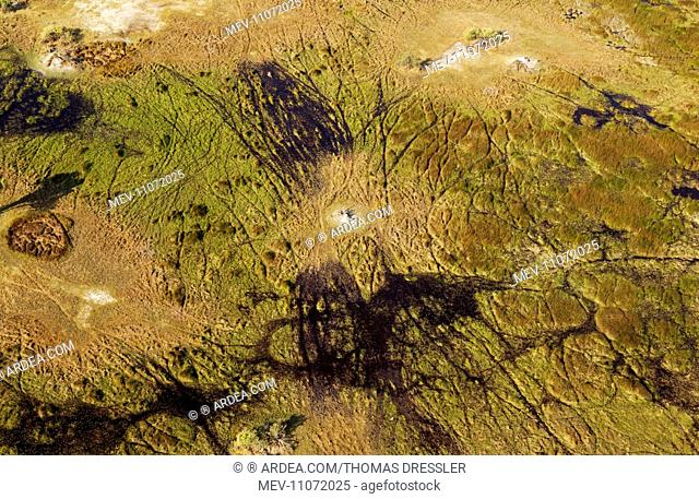 Freshwater marshes with animal trails and termite hill aerial view - Okavango Delta, Moremi Game Reserve, Botswana