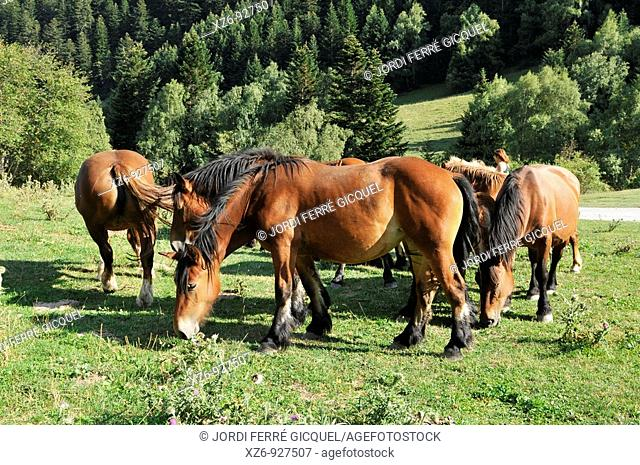 free group of horses in the mountains