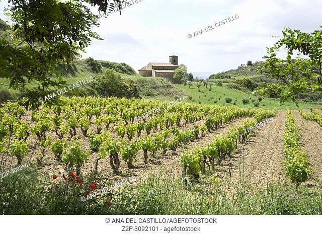 Vineyards with Santa Maria de la Piscina romanesque church at San Vicente de la Sonsierra La Rioja Spain