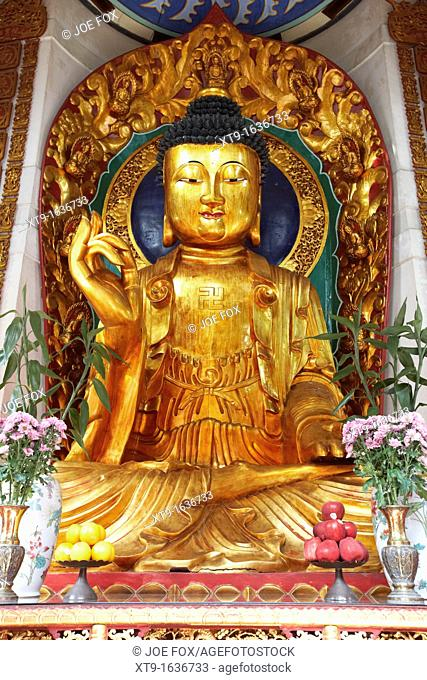 large golden buddha statue in po fook hill cemetery sha tin new territories hong kong hksar china asia