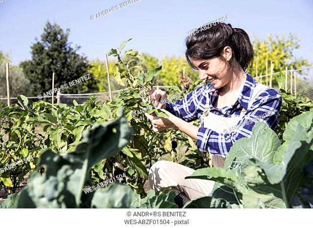 Woman working on farm tending to vegetables