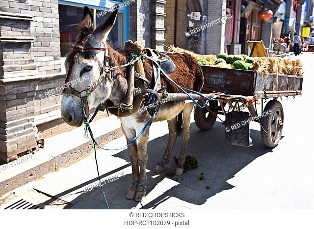 Donkey cart in a street, HohHot, Inner Mongolia, China
