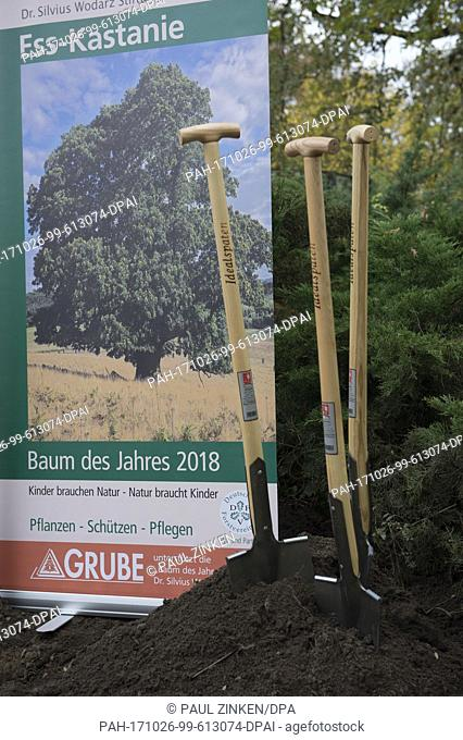 Spades and a poster at the announcement of the tree of the year for 2018 in Berlin, Germany, 26 October 2017. The tree selected was the sweet chestnut