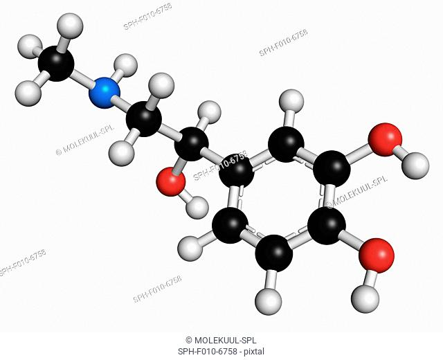Adrenaline (adrenalin, epinephrine) neurotransmitter molecule. Used as drug in treatment of anaphylaxis Atoms are represented as spheres with conventional...