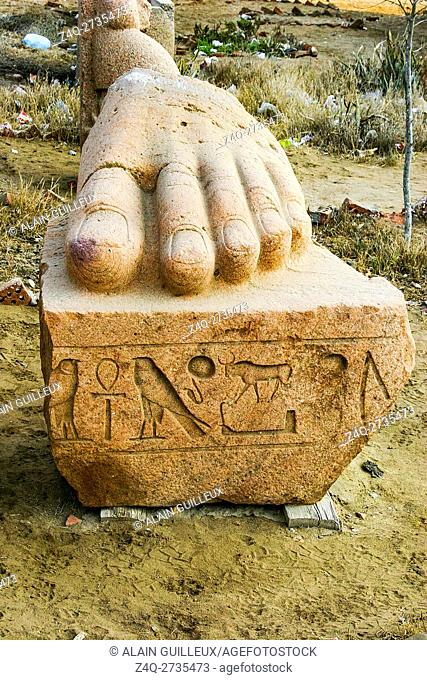 Egypt, Nile Delta, Tanis, the foot of a colossus of Ramses II, found near the tombs and now displayed outside the excavation house