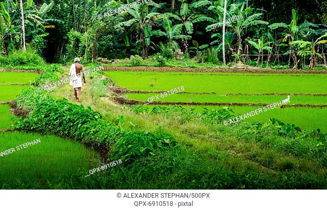 A Sri Lankan man returns to his home in the forests of Sri Lanka after working in rice paddies