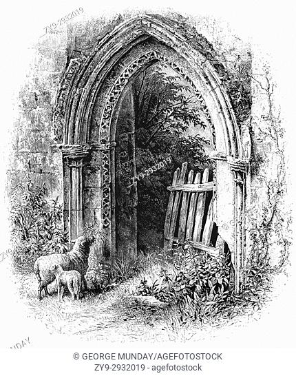 1870: Sheep beside a crumbling, but beautiful Romanesque Arch at Rievaulx Abbey, a former Cistercian abbey in Rievaulx, near Helmsley in the North York Moors...