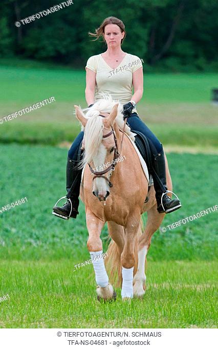 woman rides warmblood