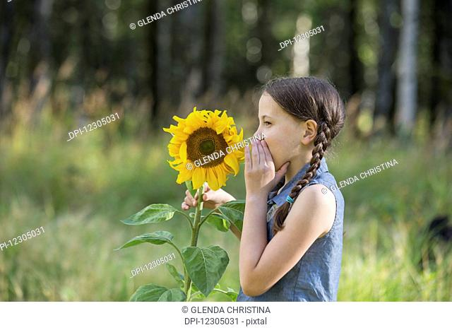 A little girl whispers to a sunflower in full bloom in late summer a field in Palmer Alaska