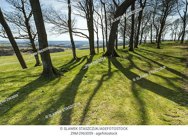 Early spring at Chanctonbury Ring, neolithic hillfort in South Downs National Park, East Sussex, England