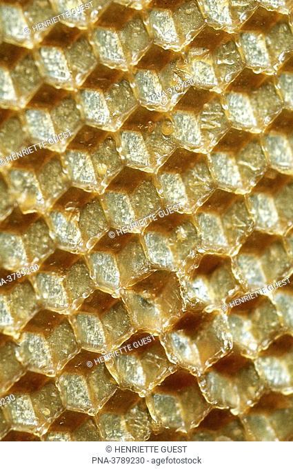 Honeycomb, close-up