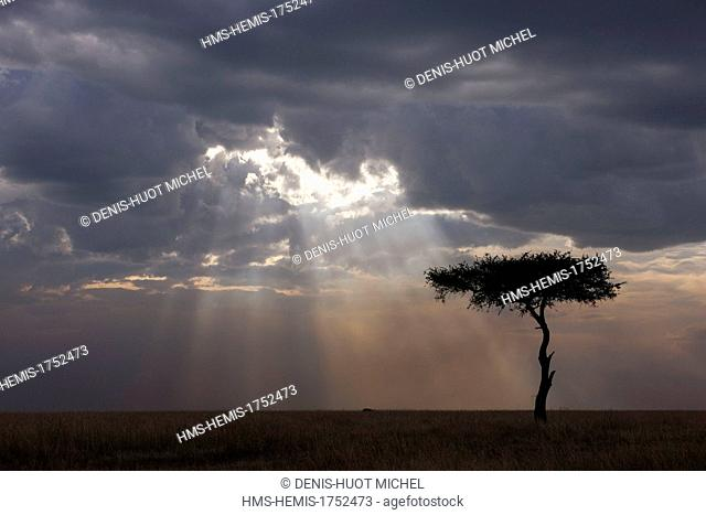 Kenya, Masai-Mara game reserve, rain