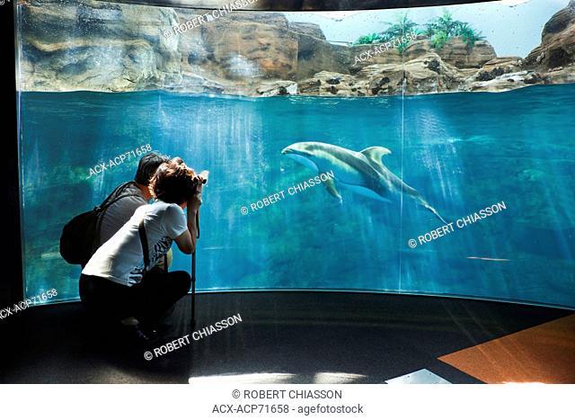 Couple snapping a picture of a dolphin at Osaka Aquarium Kaiyukan, Osaka, Japan
