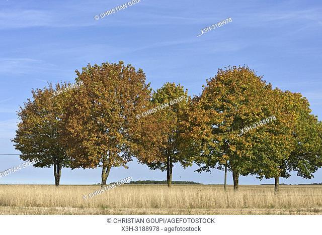 route de campagne bordee d'arbres, departement d'Eure-et-Loir, region Centre-Val de Loire, France, Europe/tree-lined country road, Eure-et-Loir department