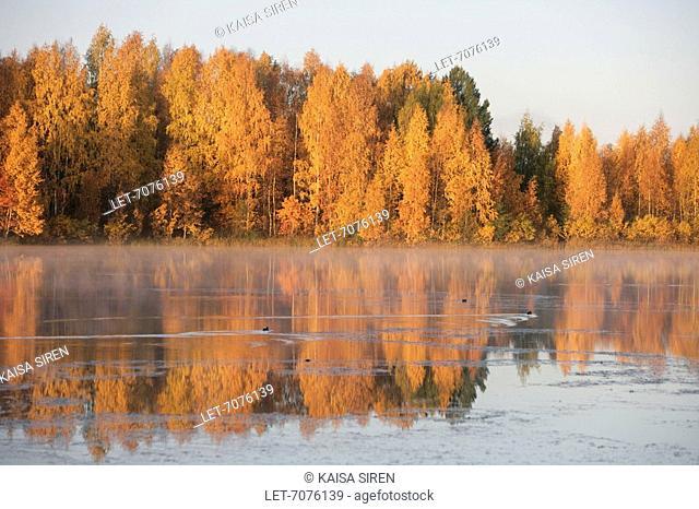Autumn colors in Finnish Lapland