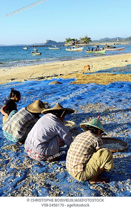 Myanmar, Rakhine State, Ngapali beach, Gyeik Taw village, Fisherwomen sorting dried fish