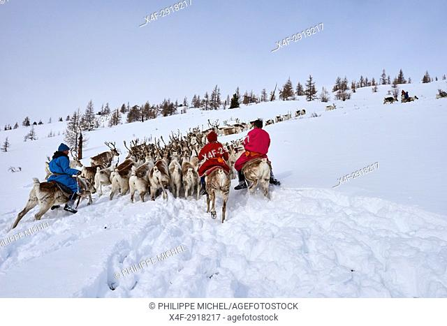 Mongolia, Khovsgol privince, the Tsaatan, reindeer herder, winter migration