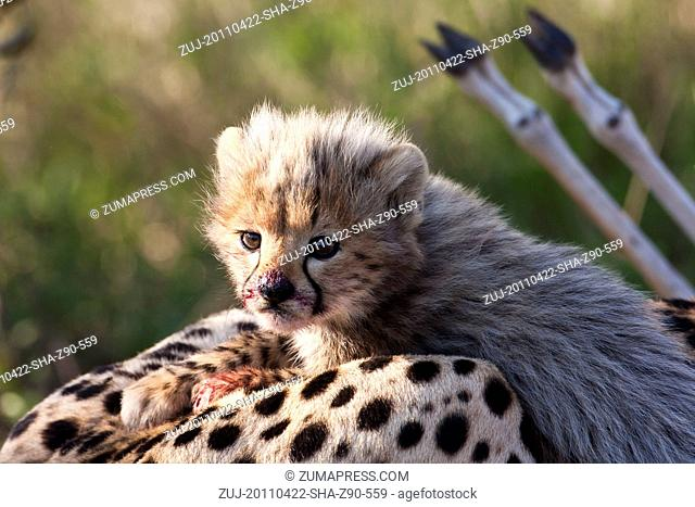 RELEASE DATE: April 22, 2011 MOVIE TITLE: African Cats STUDIO: Walt Disney Studios DIRECTORS: Alastair Fothergill, Keith Scholey PLOT: A nature documentary...