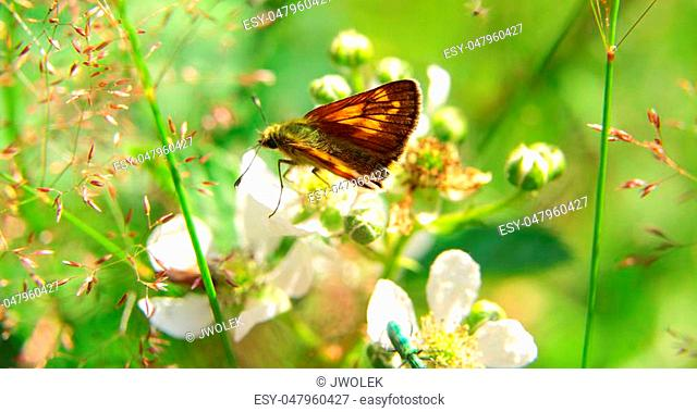 closeup of an orange and black butterfly and two other insects by daylight sitting on plants