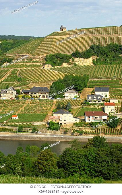 The wine-making municipality of Wormeldange with Luxembourg's premier wine-growing site Wormeldinger Koeppchen in the Moselle valley, Luxembourg