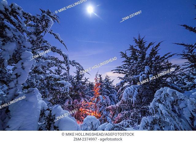 Moonlight illuminates snow covered trees and a Christmas tree in Nebraska