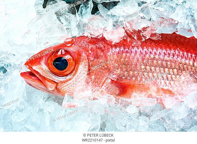 Pink fish at fish market in Naha, Japan