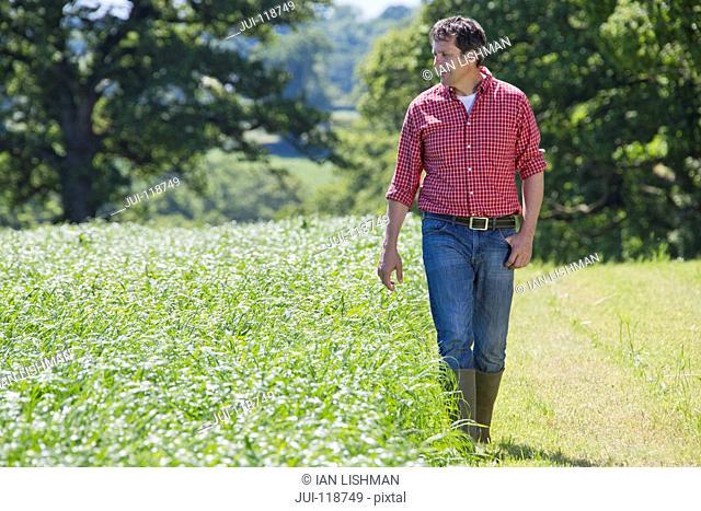 Farmer walking beside grass silage crop in field