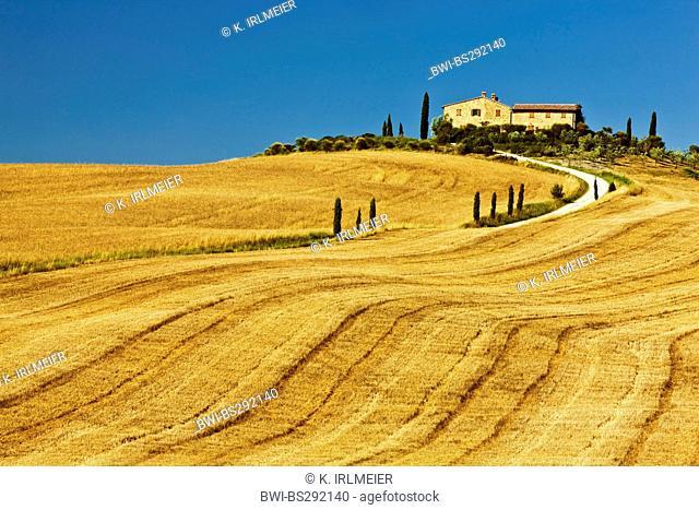 Farmhouse in Cornfield, Italy, Tuscany, Pienza
