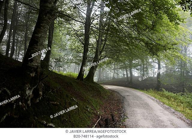 Trail, forest in mist. Belate, Baztan valley, Navarra