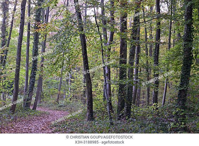 Parc du Chateau de Rambouillet, departement des Yvelines, region Ile-de-France, France, Europe/Castle's park of Rambouillet, Yvelines department