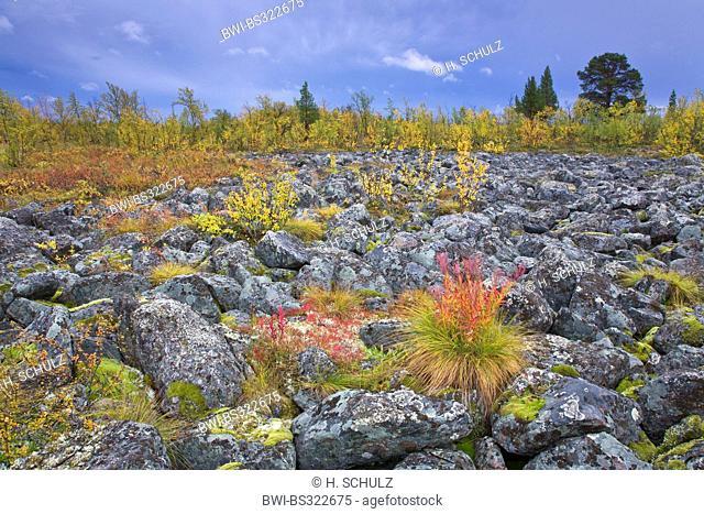 tundra in fall, Sweden, Lapland, Sjaunja Naturreservat, Norrbotten