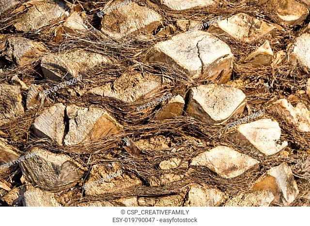 Palm tree bark pattern natural