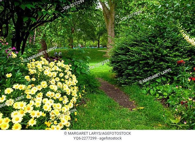 Beautiful flowers of daisies in garden, London