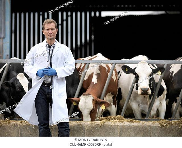 Veterinarian walking by cows in barn