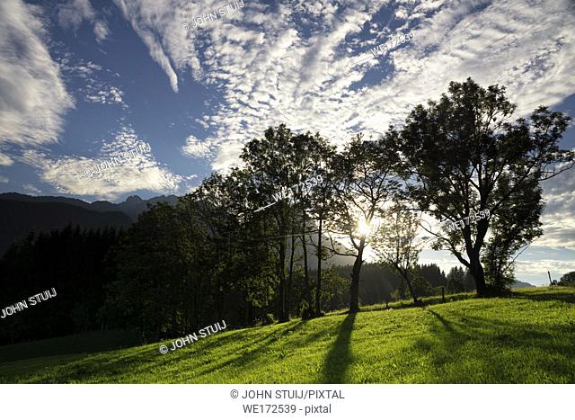 Trees just before sunset in a hilly landscape near the Austrian village Annaberg im Lammertal