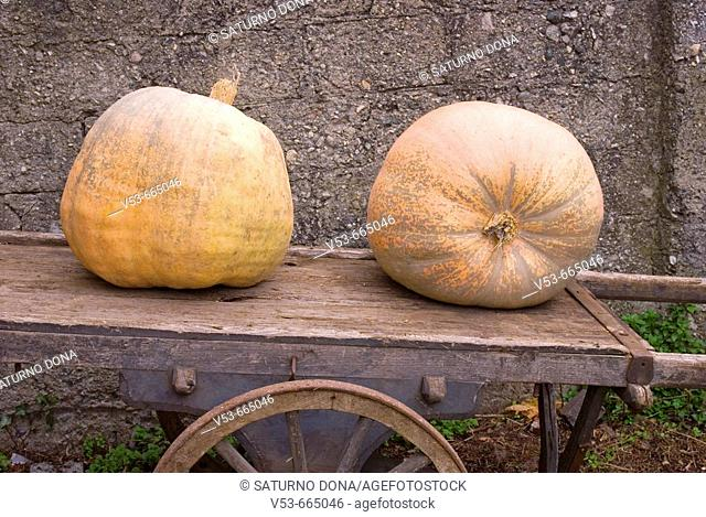 Two giant pumpkins on the carriage