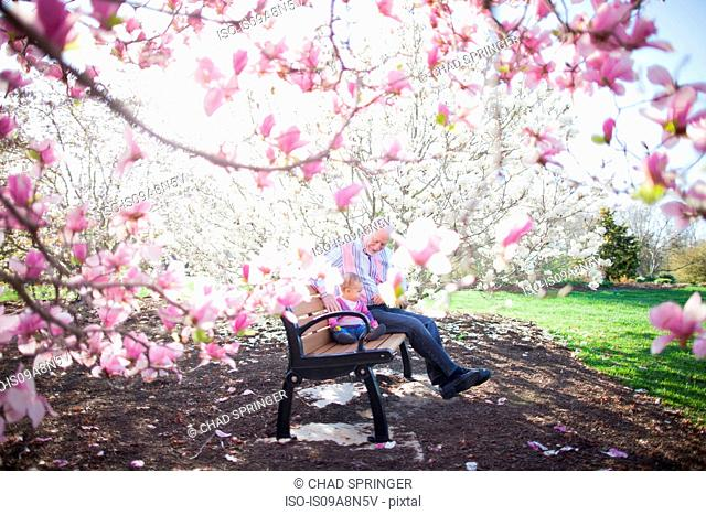 Grandfather and granddaughter amongst magnolia blossom
