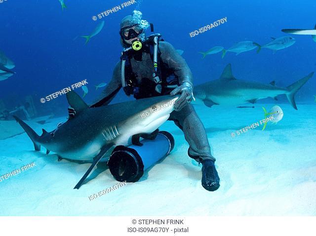 Shark feeder with shark
