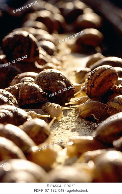 Close-up of snails