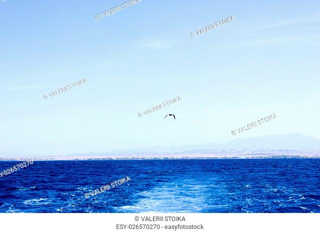 Seagull flying after the ship. Sea Blue Water background