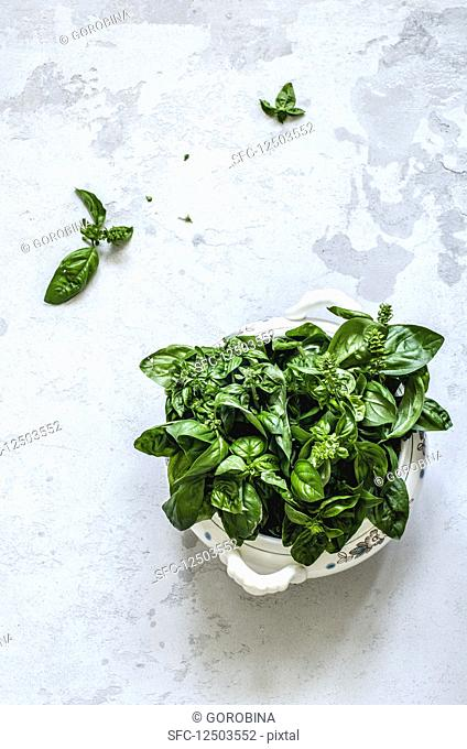 Bouquet of green basil in an old tureen on a concrete background
