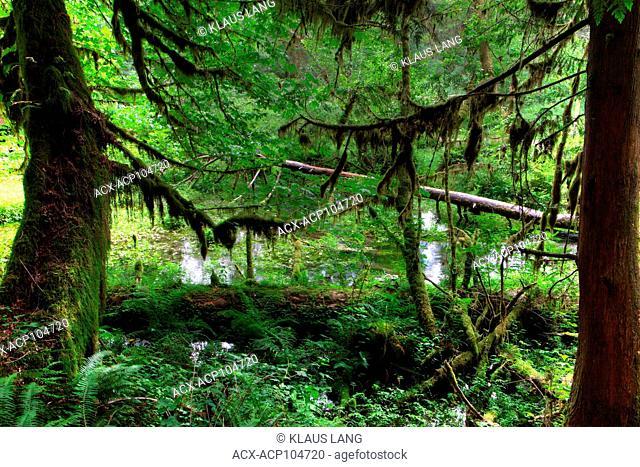 Olympic National Park, Hoh Forest, Washington, USA