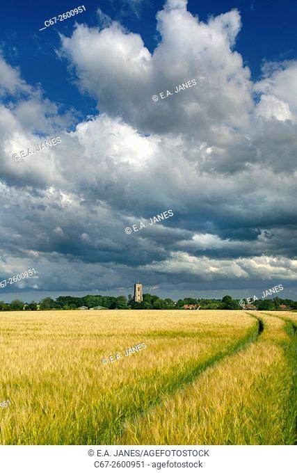 St James church Southrepps Norfolk and ripening barley field