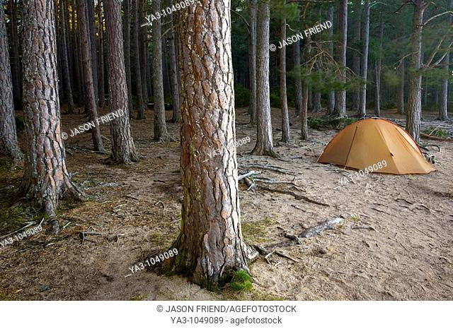 Scotland, Scottish Highlands, Cairngorms National Park  Wild camping in the Abernethy Forest on the shores of Loch Garten