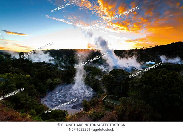 The 30 meter high Pohutu Geyser erupting at sunrise, Te Puia New Zealand Maori Arts & Crafts Institute, Whakarewarewa Thermal Valley, Rotorua, North Island