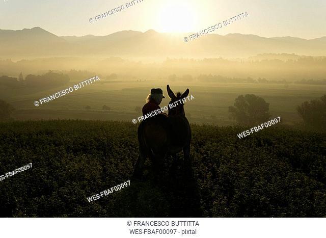Italy, Tuscany, Borgo San Lorenzo, senior man standing with donkey in field at sunrise above rural landscape