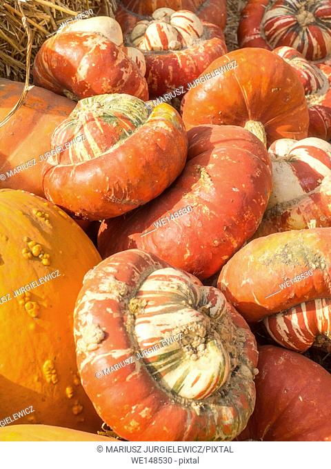 Turban Squash has colors that vary from bright orange, to green or white. It has golden-yellow flesh and its taste is reminiscent to hazelnut
